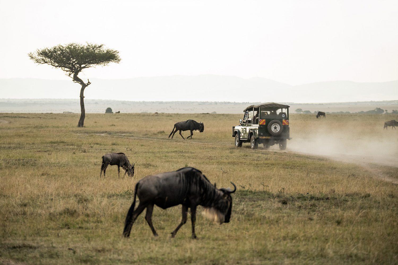 Luxury Safari & Cape Town Tour 4