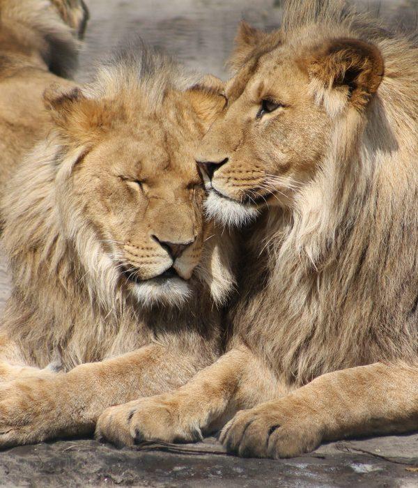 Luxury Safari & Cape Town Tour