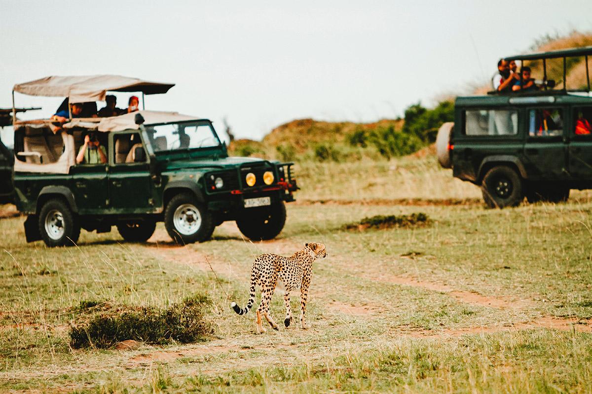 Luxury Safari Private Game Drives