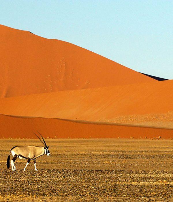 South Africa and Namibia Tour Gemsbok Desert